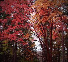 """The Stillness of October Gold"" by Mystic Raven Art"