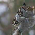 Sometimes you feel like a nut ... by autumnwind