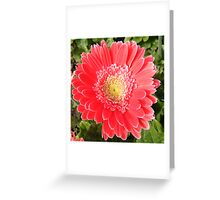 Capital Flower Greeting Card