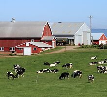 Dairy Farm In Nova Scotia by HALIFAXPHOTO