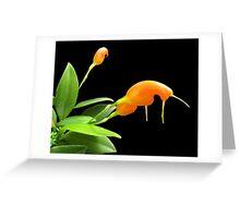 Orange Snails Greeting Card
