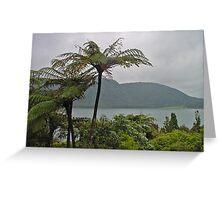 Tree Ferns Greeting Card