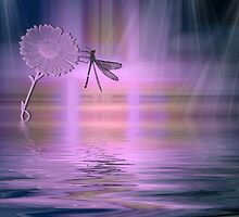 Dragonfly silhouette by Kimberly Palmer