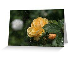 Yellow rose shower Greeting Card