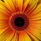 Flower Detail by Chris Filer