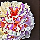 Pop Art Peony Flower by daphsam