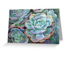 Succulents II Greeting Card