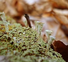 Tiny little beings by Maureen Kay