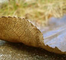 Fallen Leaf by Maureen Kay