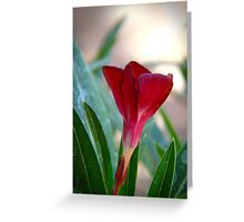 red oleander Greeting Card