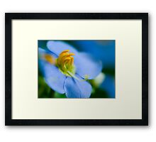 Persian Blue.  Framed Print