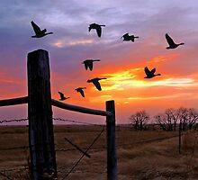 North by Northwest Flight of Geese by Jerry Walter