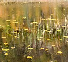 lake of lilies by Steve  Bootay