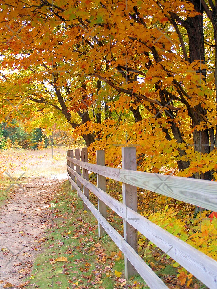 Fall at Deadmans' Hill by Megan Noble
