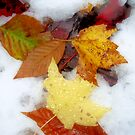 Autumn's First Snow by Megan Noble