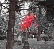 Autumn Colours by K W