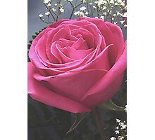 Pink Rose and Babies Breath Photographic Print