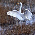 Angel Bird by Charlie Sawyer