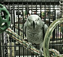 Parrot by Danielle Golding