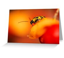 Cucumber Beetle Greeting Card