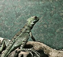Paranoid Lizard by Danielle Golding