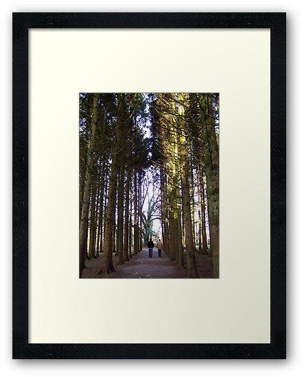A Walk through in the trees by shanmclean