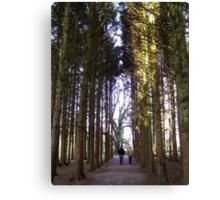 A Walk through in the trees Canvas Print