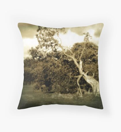 Wind Blown, Gnarled and Twisted. Throw Pillow
