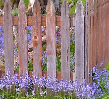 The Old Picket Fence In Spring by awanderingsoul