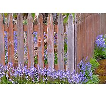 The Old Picket Fence In Spring Photographic Print