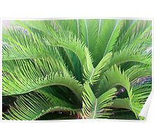 Waving Fronds Poster