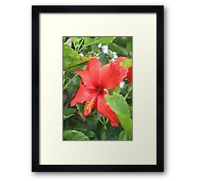Single Hibiscus Framed Print