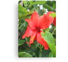Single Hibiscus Canvas Print