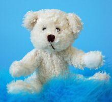 Baby Boy Bear by Renee Hubbard Fine Art Photography