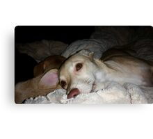 My Pretty Puppy and Dean Canvas Print