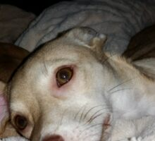 My Pretty Puppy and Dean Sticker