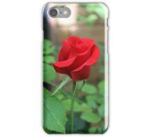 Red Rose iPhone Case/Skin