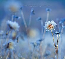 Frosty Flower by Andreas Stridsberg