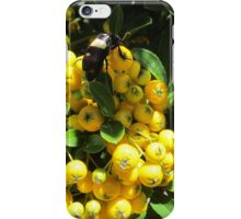 Hungry insect iPhone Case/Skin
