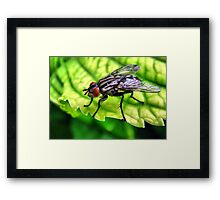 Super Fly Guy Framed Print