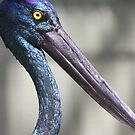 Black Necked Stork by Steve Bullock