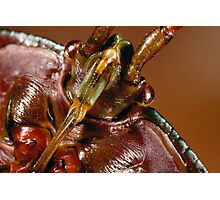 Insect Warrior Photographic Print