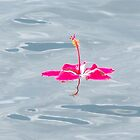 Reflecting Flower 1 by Peg Burley