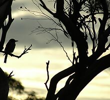 Butcher bird silhouette by BonnieH
