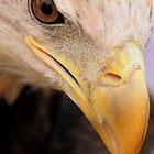 Eagle Eye by PamelaJoPhoto
