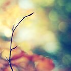 Autumn Glory by Shilpa Shenoy