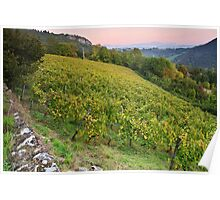 Autumn dusk on Roussette vineyard Poster
