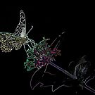 Neon Butterfly 2 by Robert Abraham