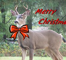 Merry Christmas Buck Deer With Bow Christmas Card by Jonice