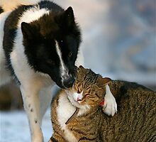 Give me a hug by Katariina Lonnakko
